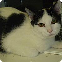 Adopt A Pet :: Steve - Hamburg, NY