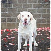 Adopt A Pet :: Forge - Seattle c/o Kingston 98346/ Washington State, WA