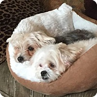 Adopt A Pet :: Wolfie and Cleo - Los Angeles, CA