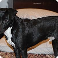 Adopt A Pet :: Dobbie - Columbia, TN