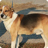 Adopt A Pet :: Colby - Conesus, NY