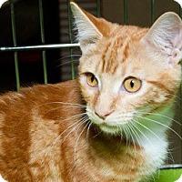 Adopt A Pet :: Ricky M - Sacramento, CA