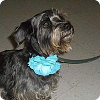 Adopt A Pet :: Rayne - Lockhart, TX