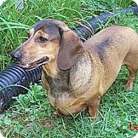Adopt A Pet :: Lady - PA - Jacobus, PA