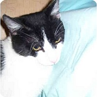 Adopt A Pet :: Harley - Jenkintown, PA