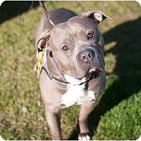 Adopt A Pet :: Leon - Reisterstown, MD
