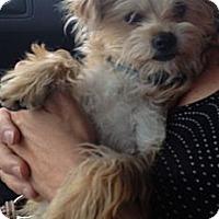Adopt A Pet :: Zey - Oceanside, CA