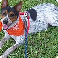 Adopt A Pet :: Banjo - Williston, FL