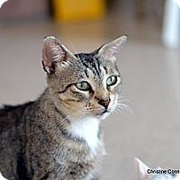 Adopt A Pet :: Cassie - Island Park, NY