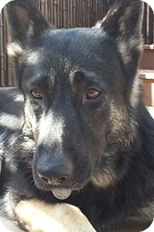 German Shepherd Dog Dog for adoption in Sacramento, California - Mikayla