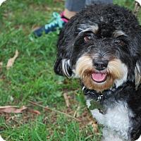 Adopt A Pet :: Bowser - Sherman Oaks, CA