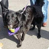 Adopt A Pet :: Cyrus - Brattleboro, VT