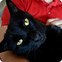 Adopt A Pet :: Jack Junior - Omaha, NE