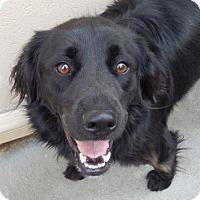 Adopt A Pet :: Pepper - Salem, NH