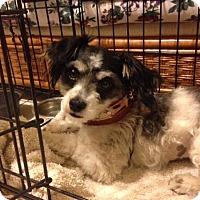 Adopt A Pet :: Betty - San Dimas, CA