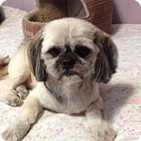 Adopt A Pet :: Benji - Mississauga, ON