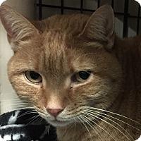 Adopt A Pet :: Dixie - New Windsor, NY