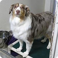 Adopt A Pet :: Autumn - Geneseo, IL