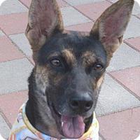 Adopt A Pet :: Merry - San Francisco, CA