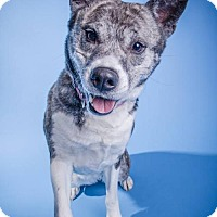 Adopt A Pet :: Yoshi - Livonia, MI