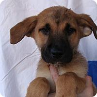 Adopt A Pet :: Cole - Oviedo, FL