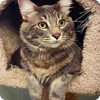 Adopt A Pet :: Bogie - Grants Pass, OR
