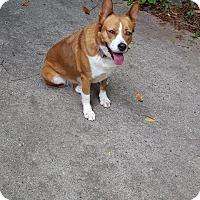 Adopt A Pet :: Apollo - Rexford, NY