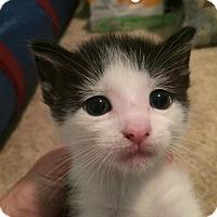 Adopt A Pet :: Perry - Herndon, VA