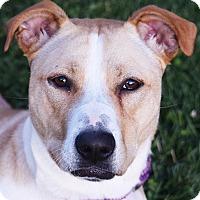 Adopt A Pet :: Autumn - Huntley, IL