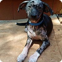Adopt A Pet :: Mickey - Lawrenceville, GA