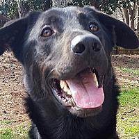 Adopt A Pet :: Zeus - Roswell, GA