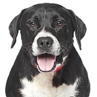 Adopt A Pet :: Chuck L. - Santa Monica, CA