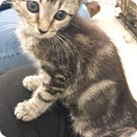 Adopt A Pet :: Splash - Stafford, VA