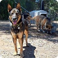 Adopt A Pet :: Colt - San Diego, CA
