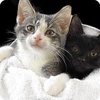 Adopt A Pet :: Viktor & Bob - Westwood, NJ