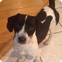 Adopt A Pet :: Tony - E. Greenwhich, RI