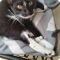 Adopt A Pet :: C.B. - Fort Pierce, FL