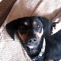 Adopt A Pet :: Buddy - Tucson, AZ