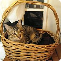 Adopt A Pet :: Bandit AKA Elwood - Houston, TX