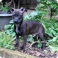 Adopt A Pet :: Connor the Great - San Jose, CA