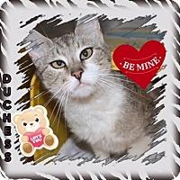 Adopt A Pet :: Duchess - Harrisburg, NC
