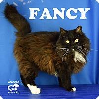 Adopt A Pet :: Fancy - Carencro, LA