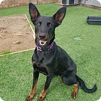 Adopt A Pet :: Anubis - Santa Clarita, CA