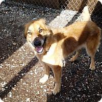 Adopt A Pet :: YUMA - Phoenix, AZ