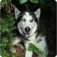 Adopt A Pet :: Wolfgang - Belleville, MI
