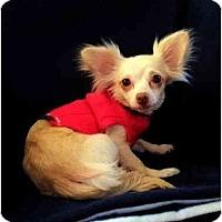 Adopt A Pet :: Megan - Mooy, AL