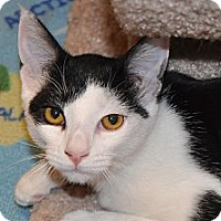 Adopt A Pet :: Addie - Foothill Ranch, CA