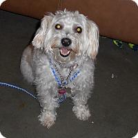 Adopt A Pet :: Heidi - Meridian, ID