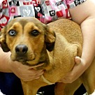Adopt A Pet :: Ruca