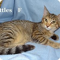 Adopt A Pet :: Skittles - Bentonville, AR
